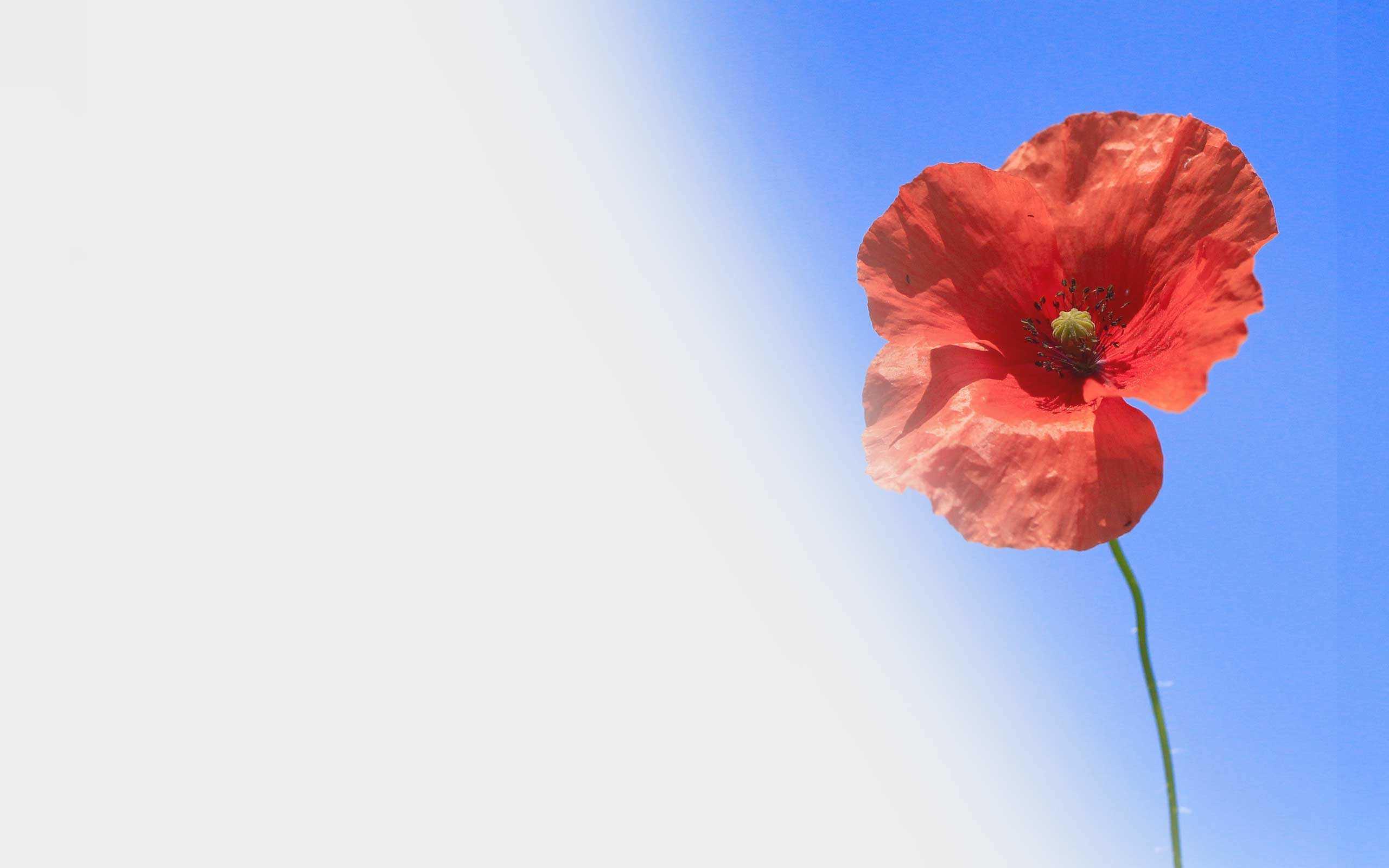 heavenly-spa-hilton-head-spa-veterans-special