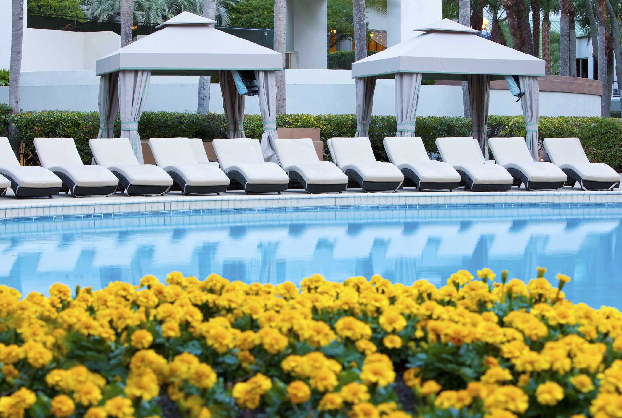 a large pool on a sunny day surrounded with pool lounge chairs and bright flowers