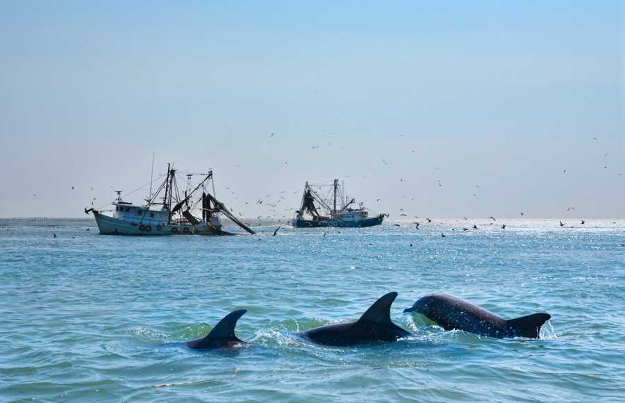 A shipwreck on bright blue waters with three active dolphins swimming by